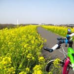 あの投稿をもう一度 (2) :「江戸川サイクリングロードの菜の花 」 by LZPT2IBさん