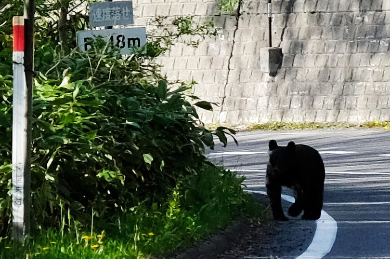 眼の前にクマがいた。