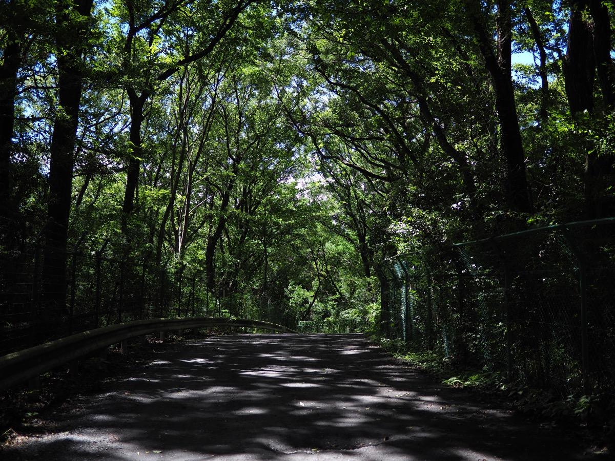 狭山湖〜野山北・六道山公園