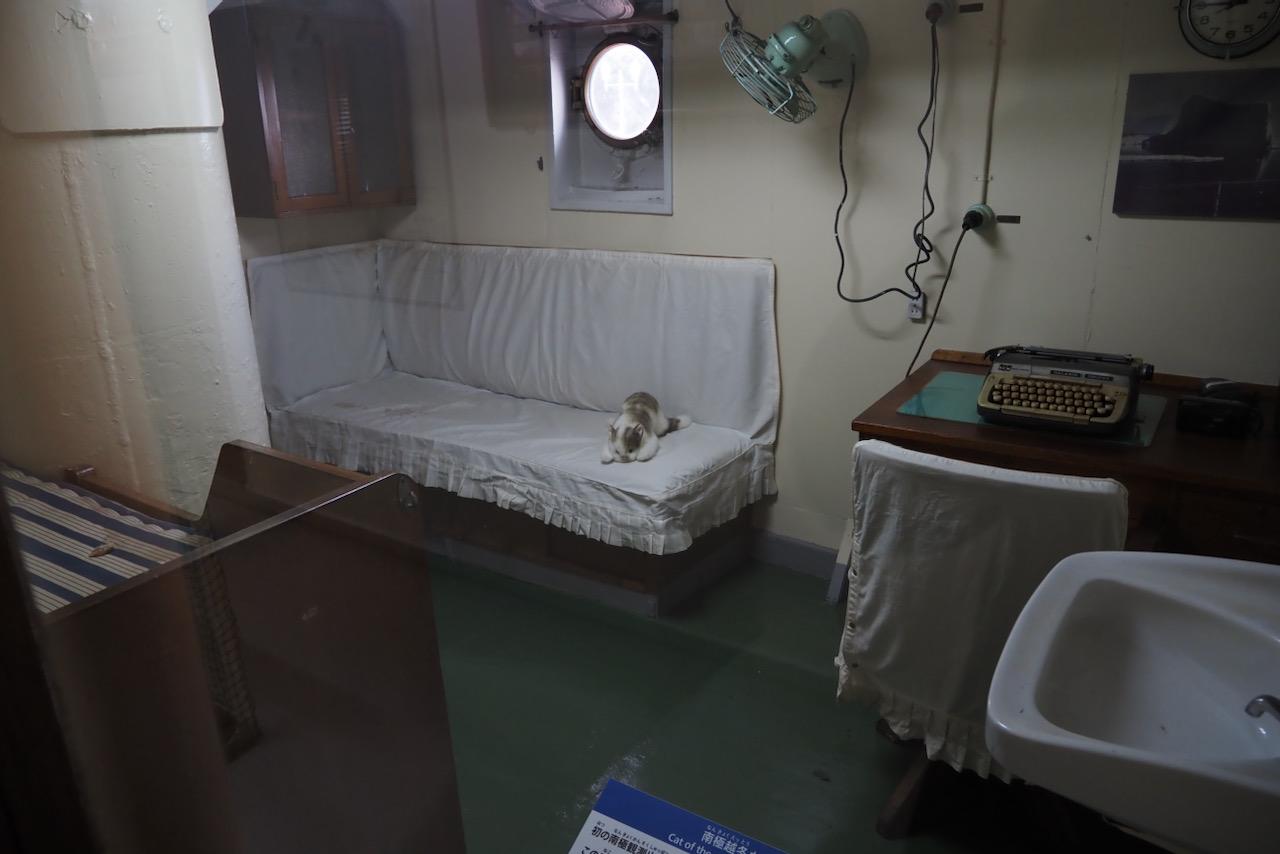 南極越冬ネコの「タケシ」