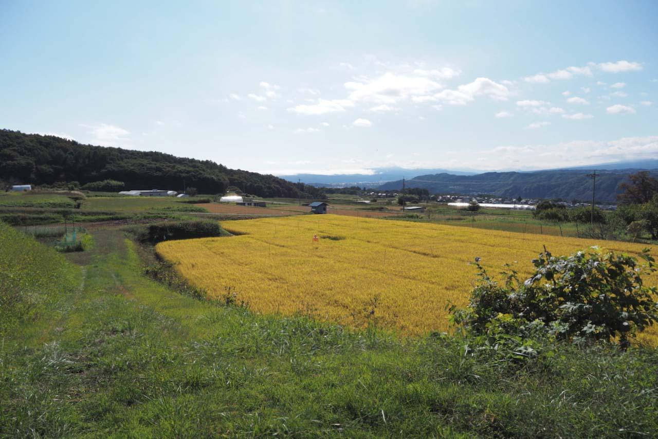 滋野の田園風景